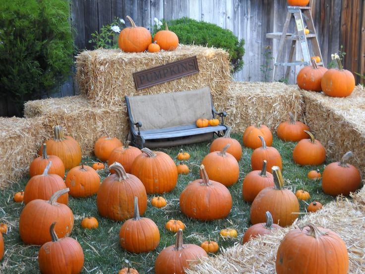 pumpkin patch birthday ideas | Baby Jake's First Birthday or Pumpkin Extravaganza