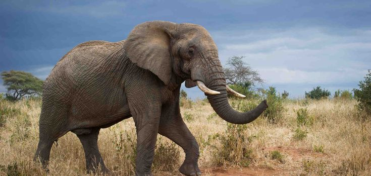 We all have a role to play in ending the ivory trade | Clinton Foundation