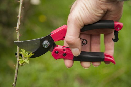 Pruning to perfection! Pruning should not be a dreaded chore. With the right tools and correct information, pruning can be easy: