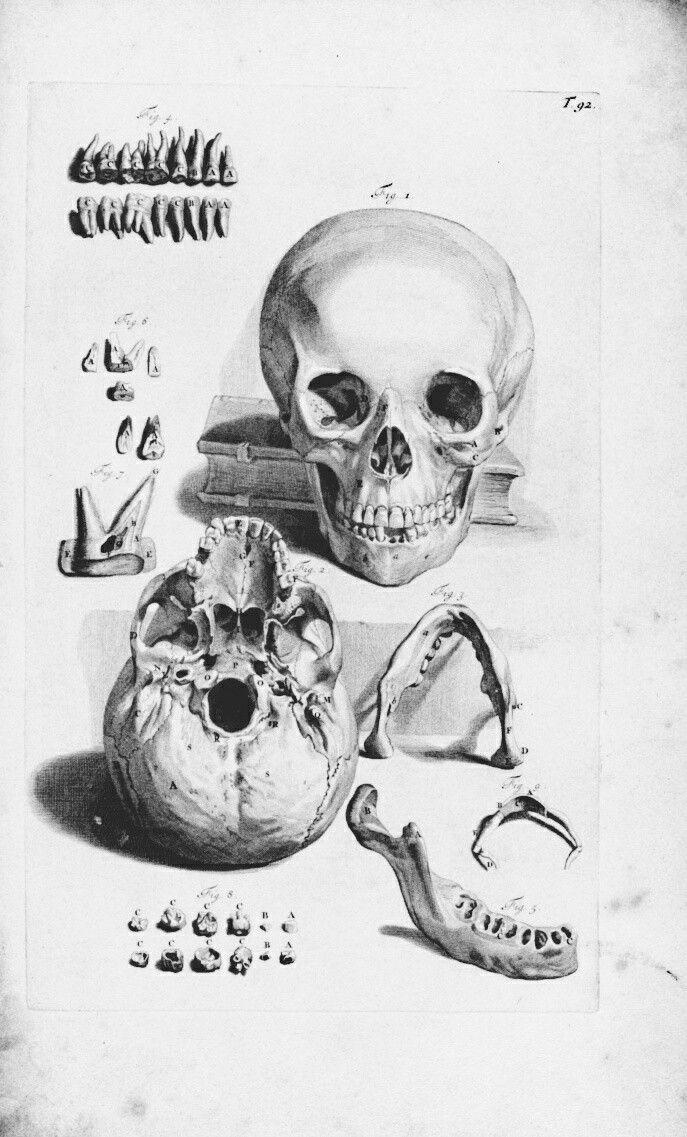 Pin by Виктория on anatomic   Vintage skull, Skull anatomy ...