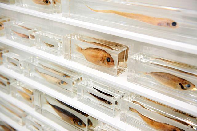 """Дэмиен Херст """"Истинный художник помогает миру, открывая мистические истины"""", 2006 (Галеря White Cube)"""