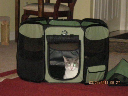 Octagon Cat Pen available through Foster And Smith.