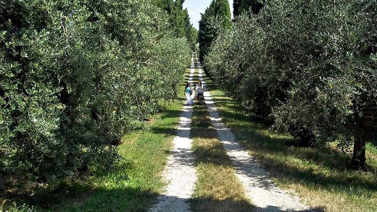 Diversivo, distrazione, fantasia, cambiamenti di moda, di #cibo, amore e #paesaggio. Ne abbiamo bisogno come dell'aria che respiriamo. (Bruce Chatwin)  http://blog.viaggiverdi.it/2014/09/ricette-viaggio-tradizioni-gastronomiche/ foto: gli Uliveti del Lago di #Garda, foto di Luigi Granata, via flickr @Ricette-della-Nonna