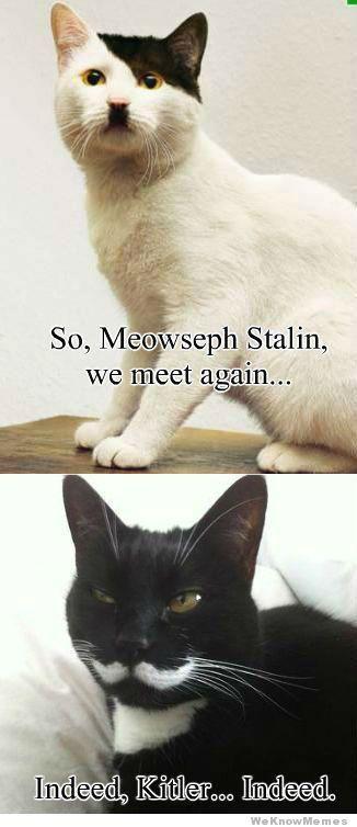 mewseph stalin/kitler