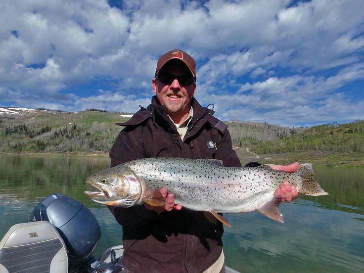 420 best images about gone fishing on pinterest fishing for Utah fishing report