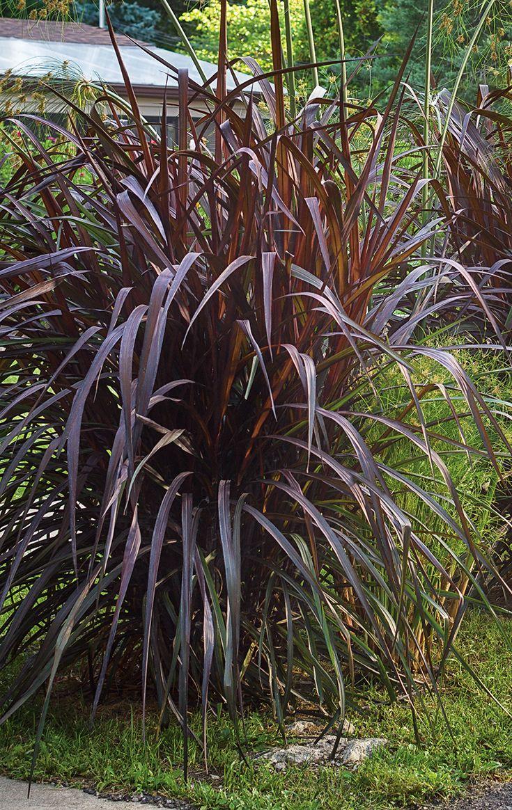 536 best gardening ornamental grasses images on for Large grasses for landscaping
