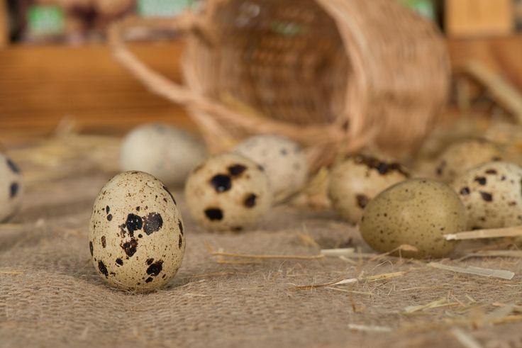 still life ürün yumurta fotoğraf çekimi