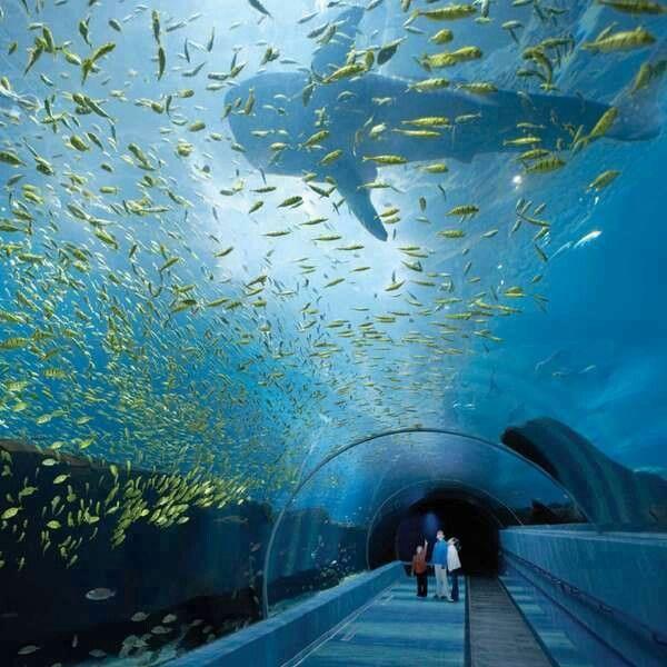 69 Best Images About Aquariums On Pinterest Mystic