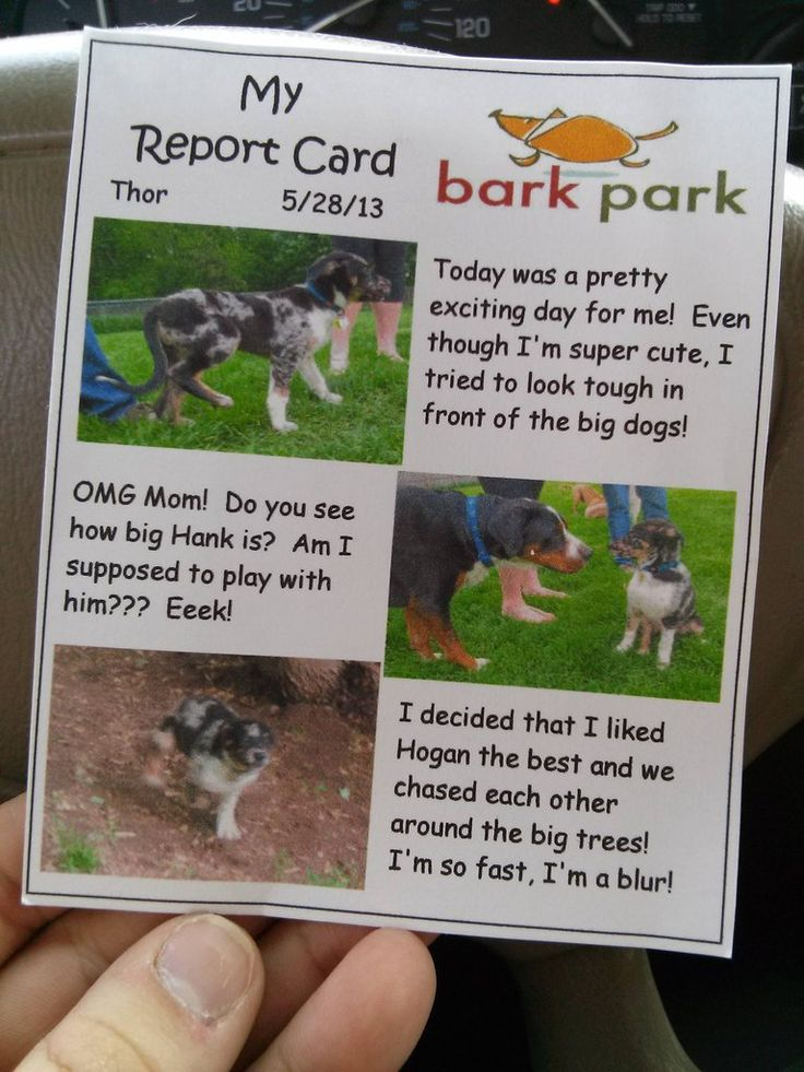 Doggy Daycare report card for Thor
