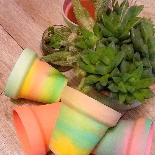 Va tomando forma 💖 🌵🌱🌾#succulent #succulove #succulover #cactus #cactusclub #cactuslover #cactuslife #macetas #palermo