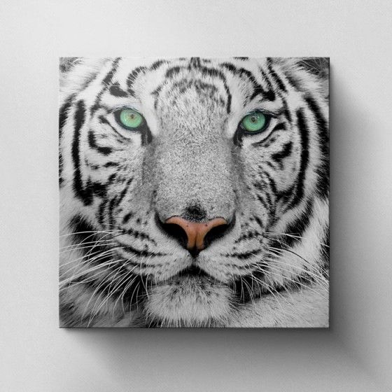 White Tiger Face - Canvas Print