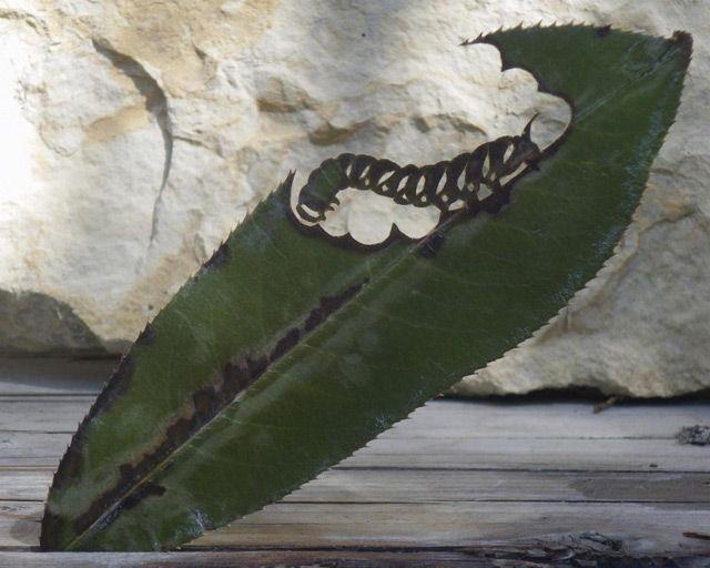 Cut-Away Leaf Art by Lorenzo Durán