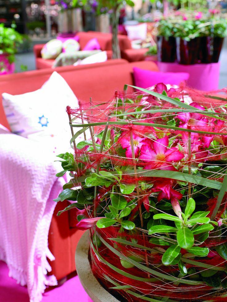12 best images about plants zimmerpflanzen feng shui energie on pinterest feng shui blog. Black Bedroom Furniture Sets. Home Design Ideas
