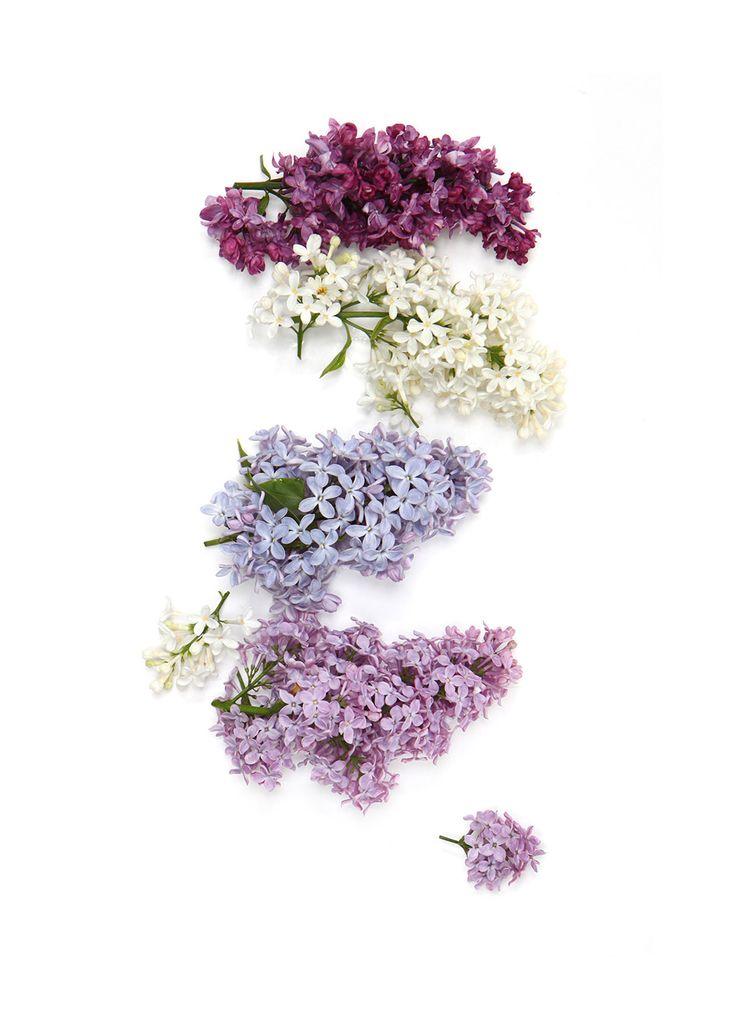 stillblog-lilac