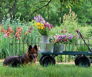 best 25 dog garden ideas on pinterest garden kennel ideas small garden ideas for dogs and. Black Bedroom Furniture Sets. Home Design Ideas