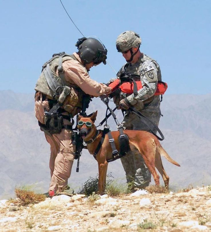 "Left, 1st Sgt. Dean Bissey, first sergeant for Company C ""Dustoff"", 3rd General Support Aviation Battalion, 82nd Combat Aviation Brigade hooks the hoist harness to Staff Sgt. Michael Hile and his military working dog ""Rronnie"" from 554th Military Police Company July 15 near Bagram Airfield, Afghanistan. (US Army photo by Spc. Aubree Rundle)"