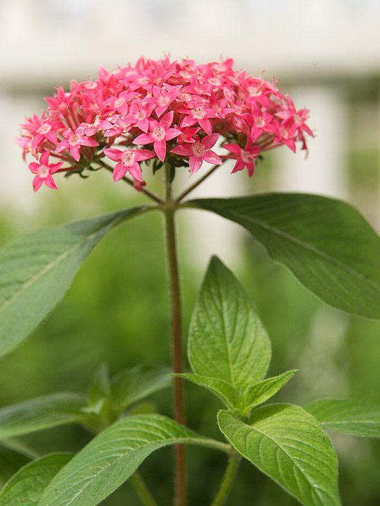 Erfly Garden Plants Gardening