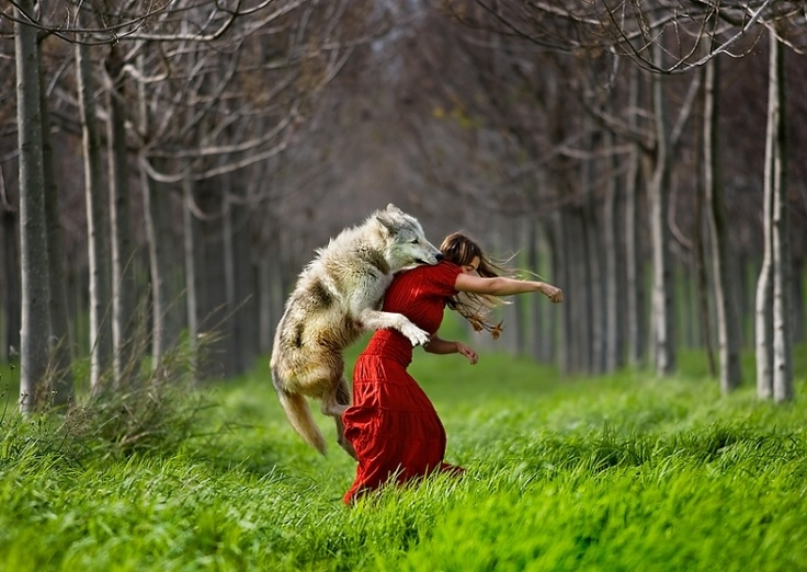 My favorite work of Shlomi Nissim: Shlomi Nissim, Little Red, Wolf, Art, Redridinghood, Shlominissim, Wolves, Red Riding Hoods, Photography