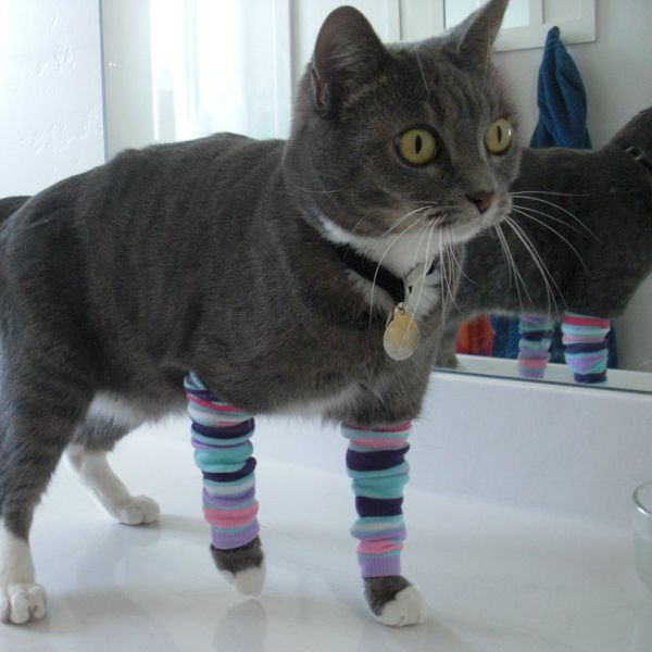 kitty legwarmers - make your ownKitty Legwarmers, Animal
