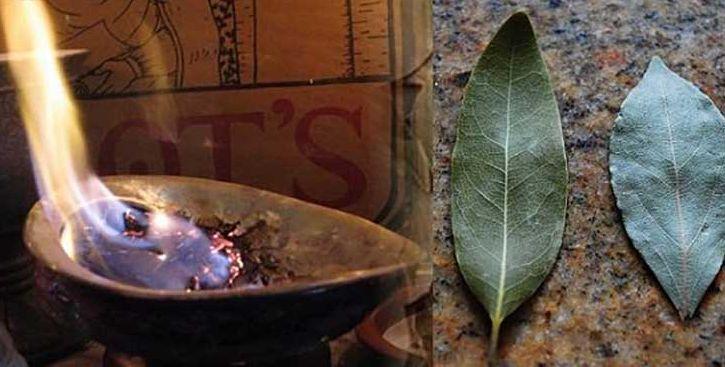 Brûlez une feuille de laurier dans votre maison. La raison ? Vous en serez étonné