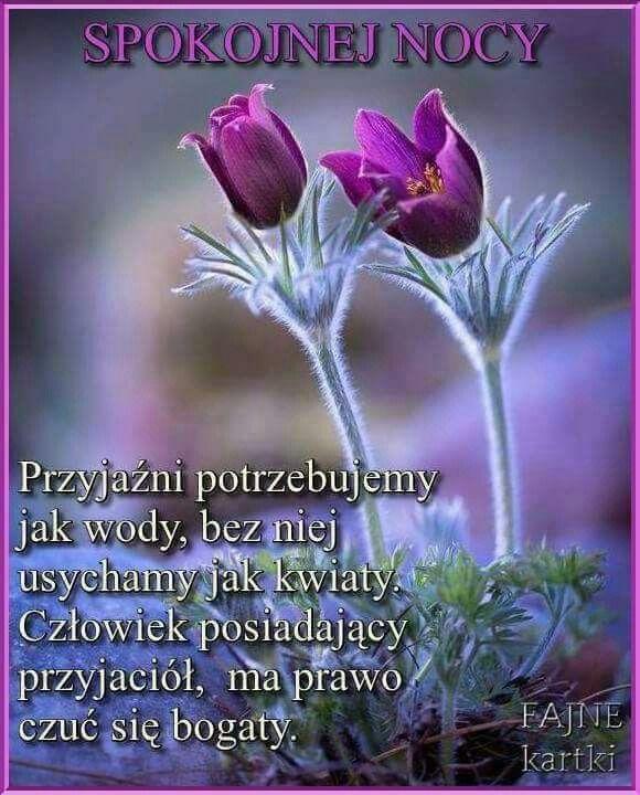 Pin By Sabina On Dobranoc Good Night All Good Night Humor