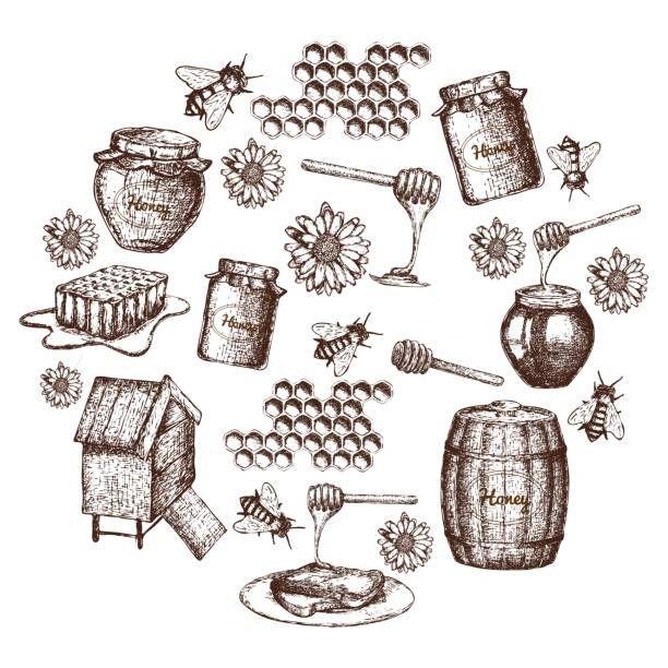 Best Honey Dipper Illustrations, Royalty-Free Vector