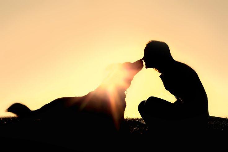 Tämä+koirarotu+sopii+sinulle+parhaiten+horoskooppimerkkisi+mukaan