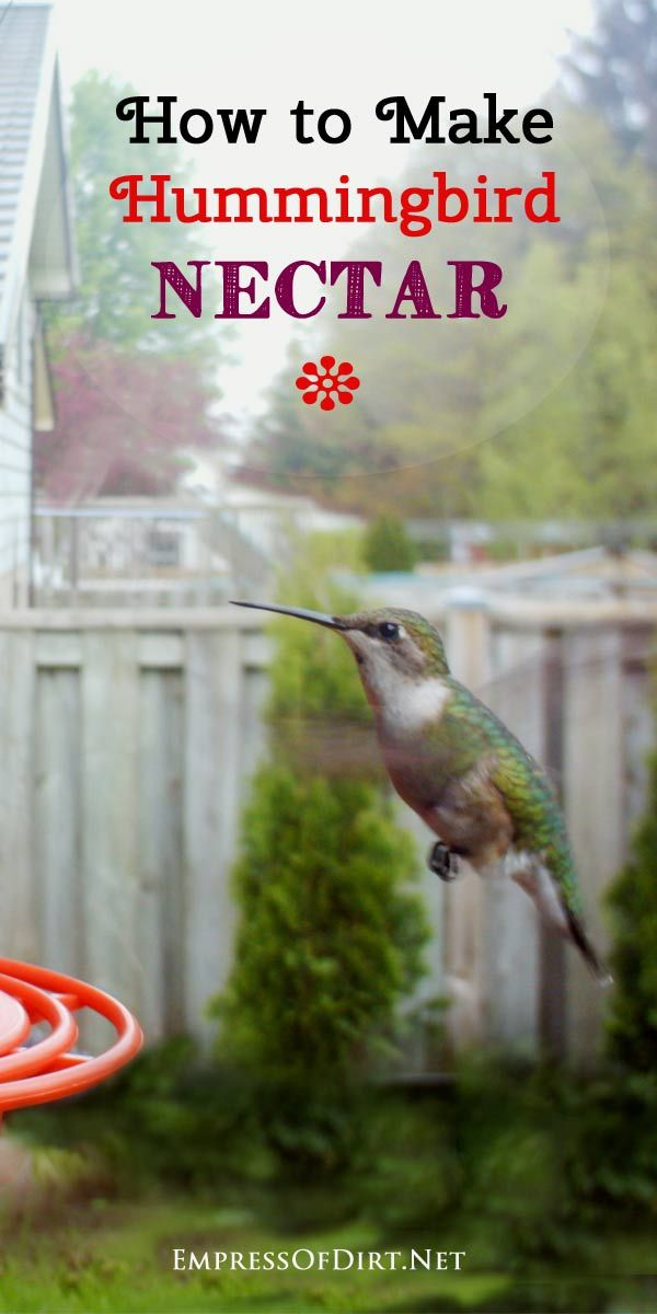 How to make hummingbird nectar for your feeder. Make sure you prepare it properly and keep the feeder clean to avoid the spread of disease.