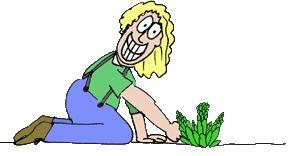The Asparagus Gardener Farm Store - mostly perennial food crop plants like asparagus, ramps, artichokes, & more