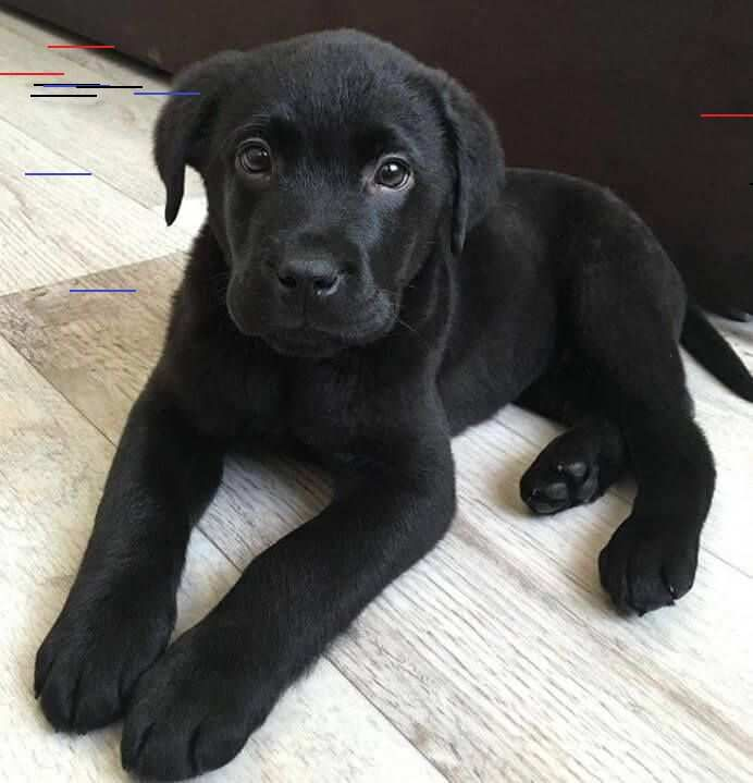 20 Animals Who Hit The Genetics Jackpot Girl Dog Names Labrador Dog Cute Animals