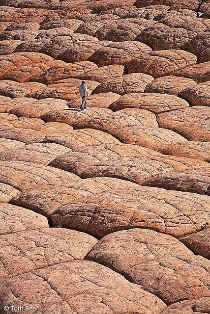 Brain Rocks - White Pocket, Paria Plateau, Arizona