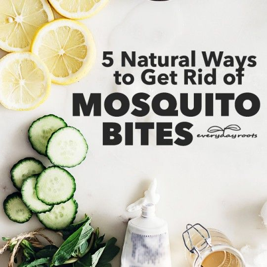 5 Natural Ways To Get Rid Of Mosquito Bites Http