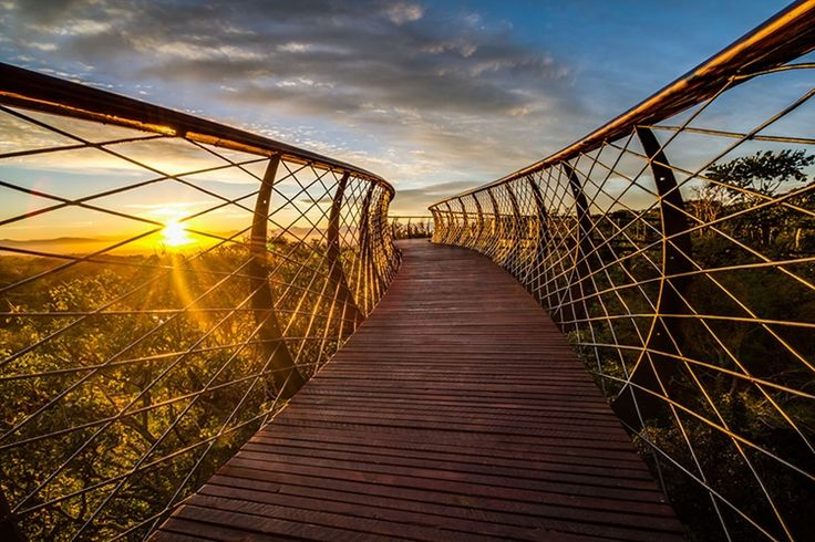 tree-canopy-walkway-cape-town