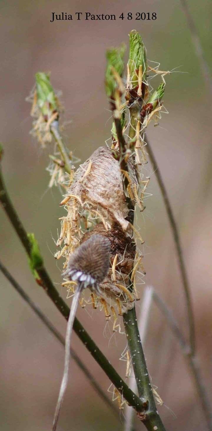 004fb9a69f219 Pin by Diane Hill on Praying mantis