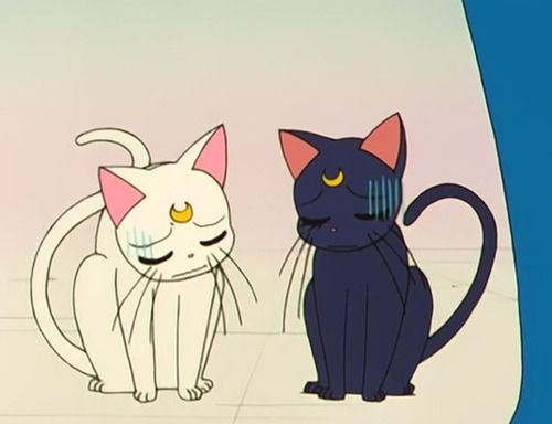 Luna and Artemis from Sailor Moon | Childhood Revisited ...