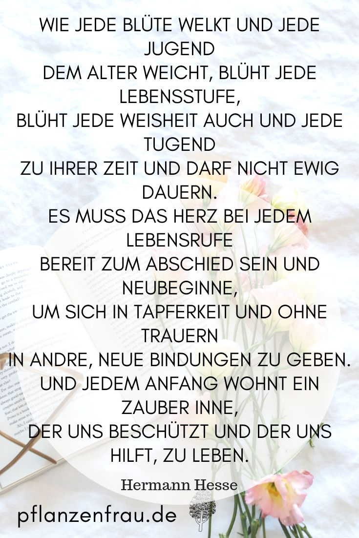 Holunder Komplettapotheke In Baumform Hermann Hesse