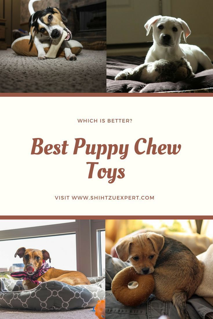 Best Puppy Chew Toys Our Expert Review Puppy Chew Toys Best Puppies Puppy Chewing