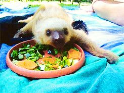 They believe in maintaining a healthy diet:   12 Reasons Why Sloth Shouldn't Be A Deadly Sin