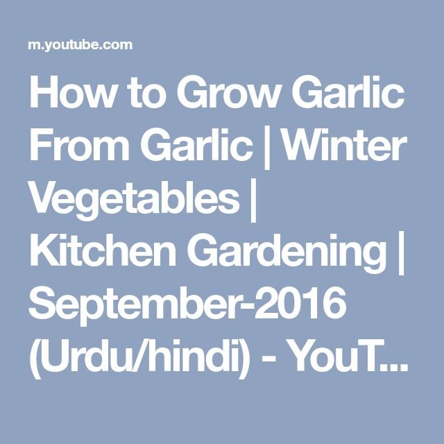 How to Grow Garlic From Garlic | Winter Vegetables | Kitchen Gardening | September-2016 (Urdu/hindi) - YouTube