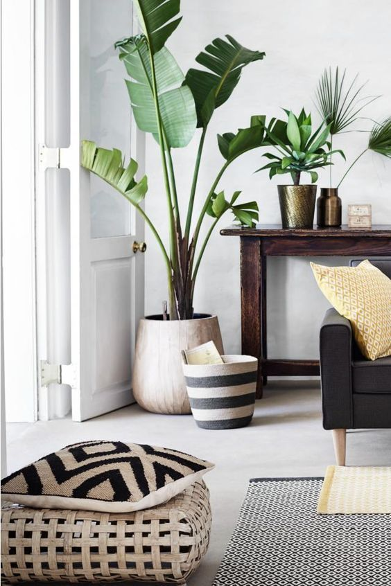 white walls, green plants, black and white accessories