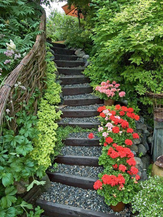 En behagfullt böjd trappa av trä och grus inbjuder besökaren att vandra upp till andra terrassplanet i makarna Söderlunds trädgård i Sundsvall. Den frodiga växtligheten som väller in hålls efter med försiktig men bestämd hand. Alltför mycket grönska på trampytorna kan bli slipprigt och halt. Runt trappan växer bland annat rönnspirea, doftschersmin, limegul rosenplister och rikligt blommande blekrosa stjärnflocka. Längs flera av trappstegskanterna står krukor med röda och rosa pelargoner…