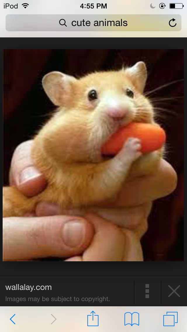 Eating a carrot