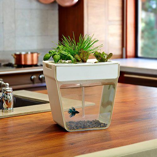 17 Best Ideas About 3 Gallon Fish Tank On Pinterest