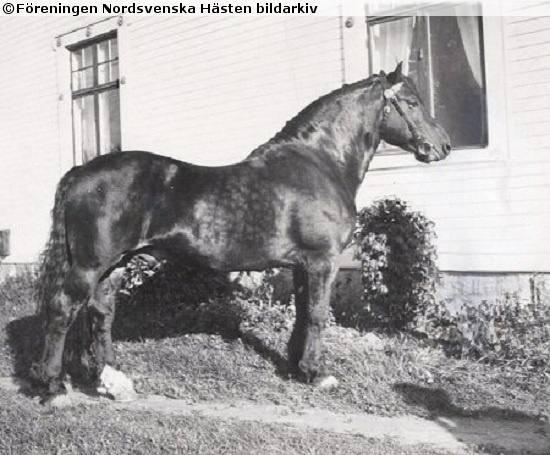 1000+ Images About Old Horse Photos On Pinterest