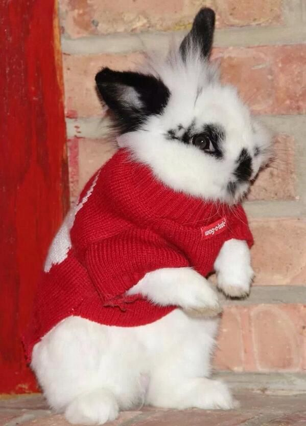 17 Best Images About Bunnies In Christmas Sweaters