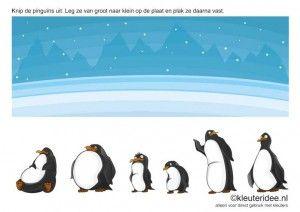 Knip de pinguïns uit. Leg ze van groot naar klein op de plaat en plak ze daarna vast. kleuteridee.nl , free printable.