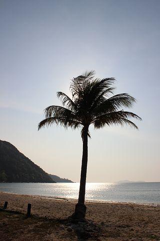 Palm Trees, Beach, Thailand, Palms