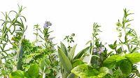 Zdrowie z roślin: ZIOŁA WEDŁUG WŁAŚCIWOŚCI LECZNICZYCH