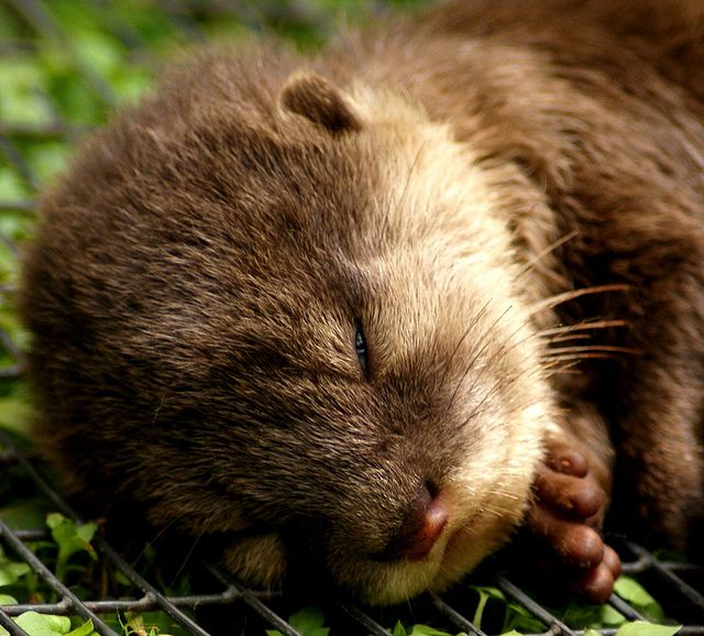 """""""Dear God, Thank you for the beauty that surrounds me.""""  otter"""