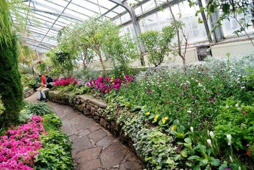 Beautiful #AllanGardens Conservatory and Park in downtown #Toronto is a peaceful oasis!: http://www.thepurplescarf.ca/2015/04/explore-toronto-allan-gardens-conservatory-park.html #ExploreTO #thepurplescarf #melanieps #garden #park #PsExplore #torontoattractions